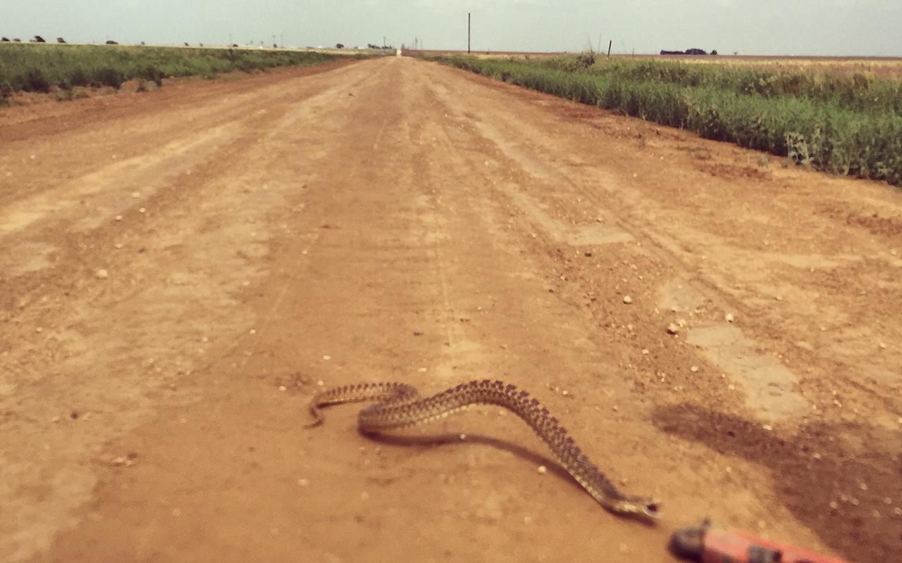rattlesnakemilkcover